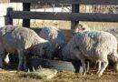 Charla para productores ovinos: se organiza un proyecto de exportación